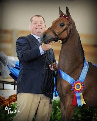 Strawberry Hill Morgans ~ Charlevoix, Michigan ~ Morgan Horses